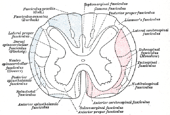 sensoriska modaliteters kanalisering